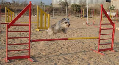 reglamento agility perros