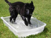 Troya bañandose