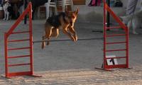 Lia entrenando agility