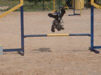 Morgan salto